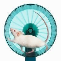 La carrera de la rata de Robert Kiyosaki