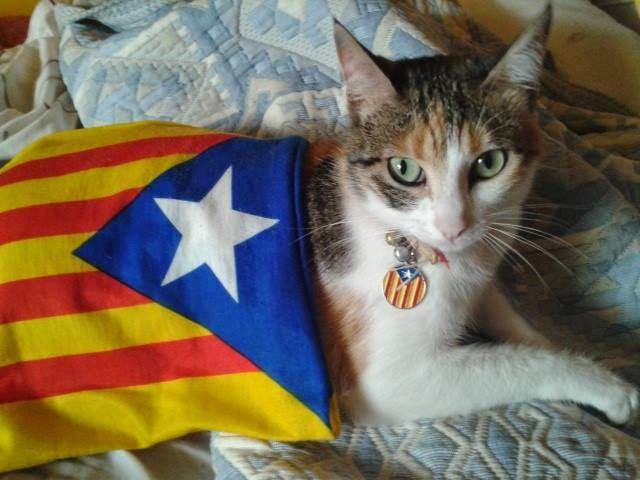 Reflexiones sobre la independencia de Cataluña y su efecto en la estrategia de inversión en dividendos