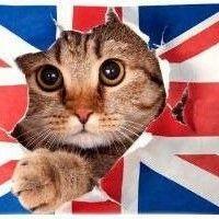 Uno de los objetivos de la cartera de Cazadividendos es estar repartida en España, Estados Unidos y Reino Unido
