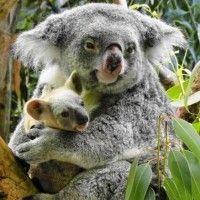 Desgranamos las razones para invertir en Australia