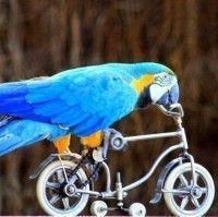 La bicicleta es un medio que combina todos los valores de la independencia financiera