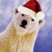 oso-navidad-feliz1