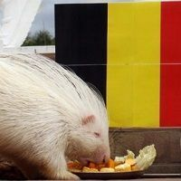Bélgica cuenta con empresas desconocidas que son aptas para la inversión en dividendos
