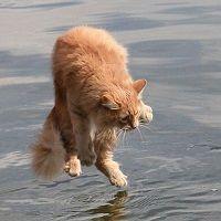 Salimos de Indra cual gato escaldado, que huye hasta del agua fría