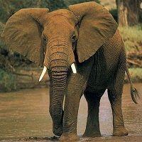 Siguiendo a buenos asesores o replicando las principales posiciones de los mejores fondos moveremos la cartera como los elefantes