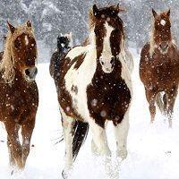 caballos_nieve