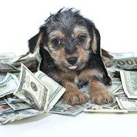 ¿Cómo iniciar una cartera de inversión si cuentas con un importe ahorrado importante?