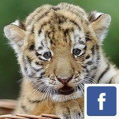 Sigue a los cazadividendos en Facebook