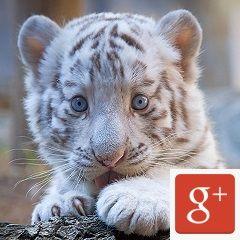 Sigue a los cazadividendos en Google+
