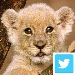 Sigue a los cazadividendos en Twitter