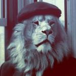 Imagen de perfil de JaviMe