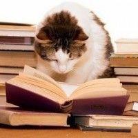 Leer e informarse es fundamental para tener clara la estrategia y conseguir la independencia financiera