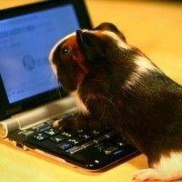 La Sra. Cazadividendos coge el teclado otra vez