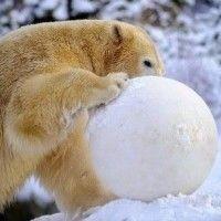 El efecto de la cuenta en dólares en la bola de nieve