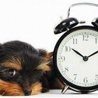 Fijar un horario es importante en tu nueva vida