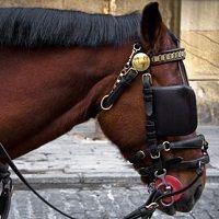 caballo_con_tapaojos