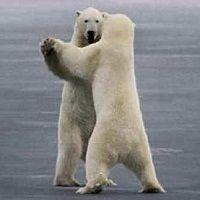 osos-bailando
