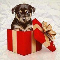 ¿Por qué no optimizar los regalos de Cazadividendos Jr? Se convertirán en ahorro adicional