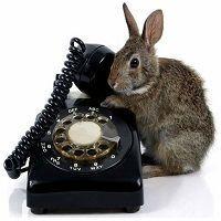 Gasto en teléfono e internet cuando no trabajas