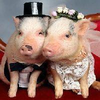 Una de las ventajas principales de los fondos de inversión es que te permiten no casarte con el depositario