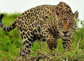 Mi sueño de tener un Jaguar se difumina