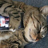 Es bueno dejar los dispositivos electrónicos una hora antes de ir a dormir