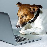 En el control de gastos es importante continuar monitorizándolos una vez revisados