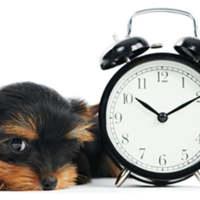 El trabajo impacto directamente en el horario de la familia