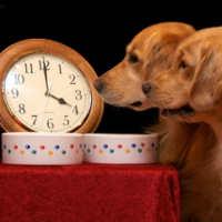 El horario rígido es uno de los inconvenientes fundamentales de ir a trabajar